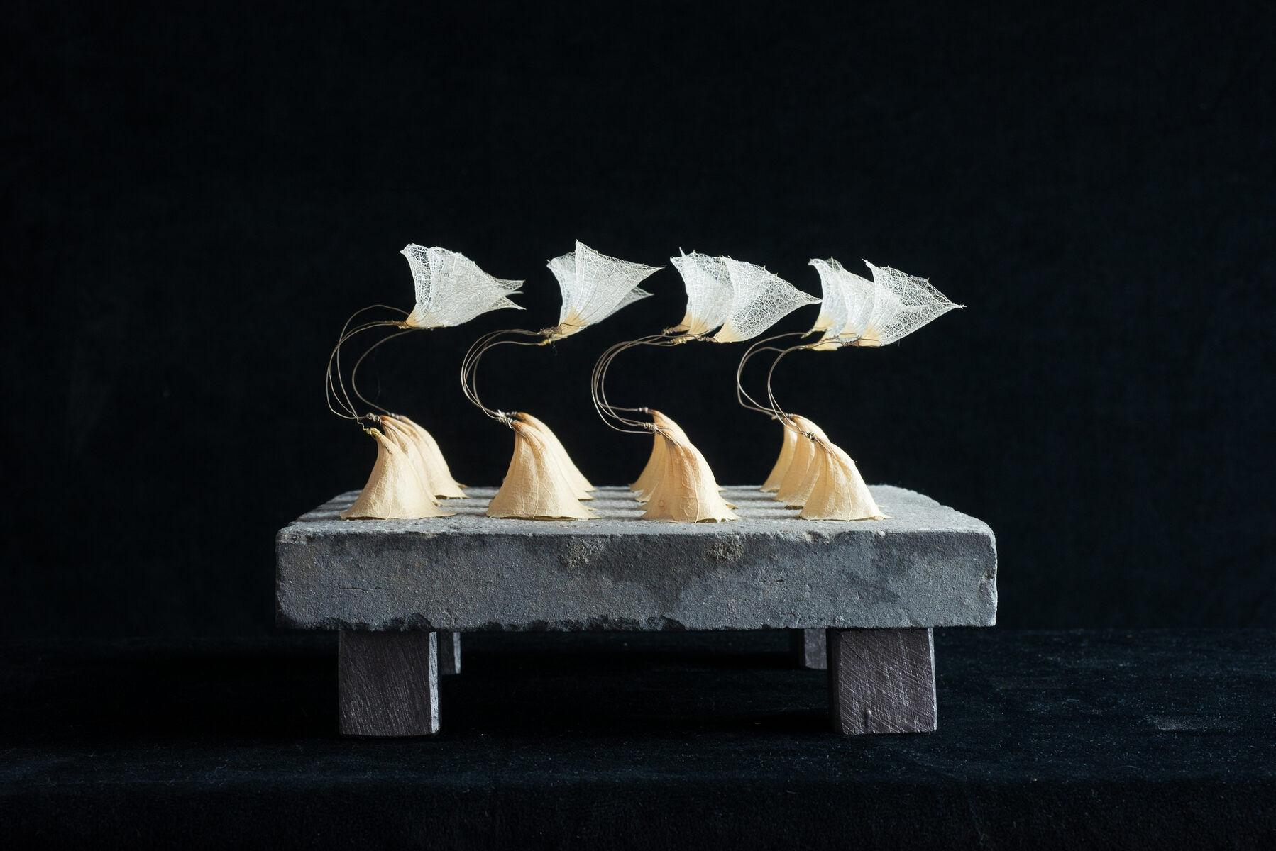 AMA, beelden  'Cella'  'Cella', mollucella kelk op estrikplavuis,20x20x16 cm., 695