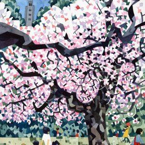 Jonathan Edwards  'Cherry blossom'  A1